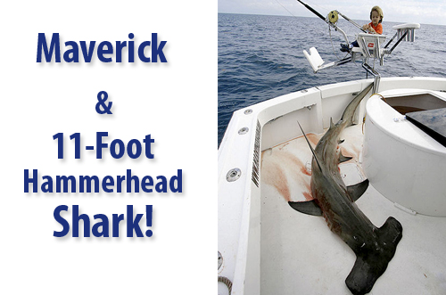 Maverick & 11-Foot Hammerhead Shark