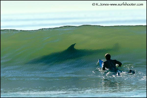 ...сообщает Калифорнийское управление по охоте и рыболовству.  Жертвой акулы стал мужчина.